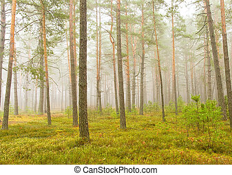 Misty autumn forest in the early morning