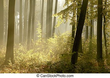 Misty autumn forest in the morning