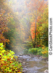 Misty autumn landscape - Running water through colorful...