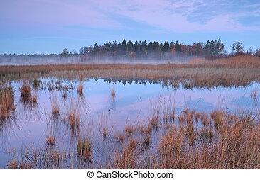 Misty autumn sunrise over swamp in Mandefijld
