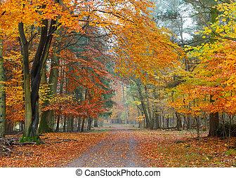 Misty autumnal park