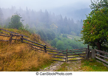 Misty beech forest on the mountain slope in a nature...