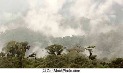Misty cloudforest in the Ecuadorian