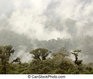 Misty cloudforest in the Ecuadorian - Timelapse