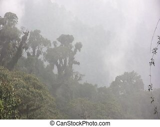 Misty cloudforest in the Ecuadorian Andes - In Ecuador