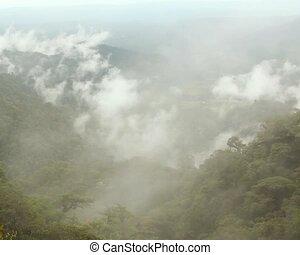Misty cloudforest in the Ecuadorian - Timelapse