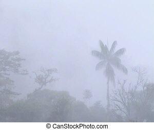 Misty cloudforest -  in the Ecuadorian upper Amazon