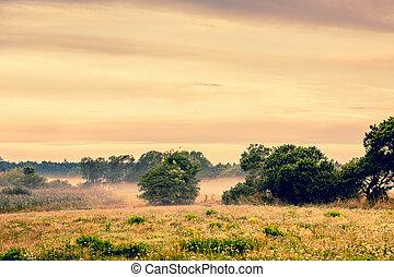 Misty countryside landscape