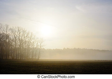 Misty countryside sunrise
