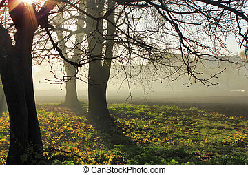 Misty dawn at the edge of the forest