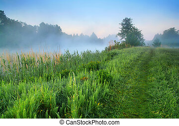 Misty dawn in spring