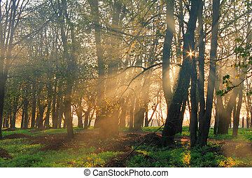 Misty dawn in the forest