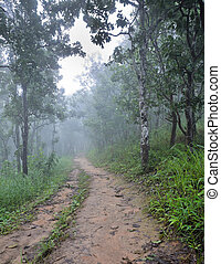 Misty dipterocarp forest, Thailand - Hiking trail through a ...