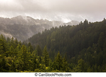 Misty Evergreen Forest after Storm