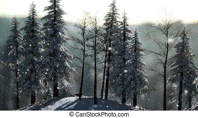 Misty fog in pine forest on mountain slopes