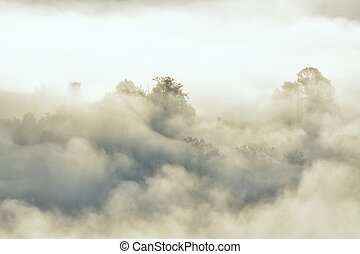 Misty fog on the mountain in tropical forest