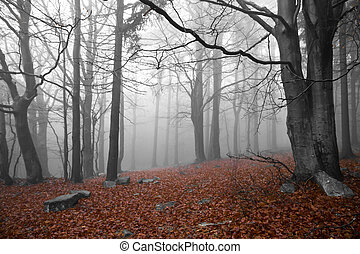 misty forest at dawn in the autumn