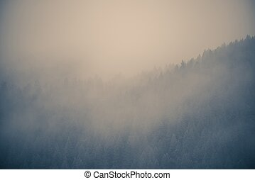 Misty Forest Background. Low Ceiling Mountain Clouds.