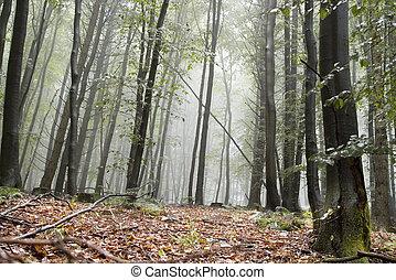 Misty forest floor