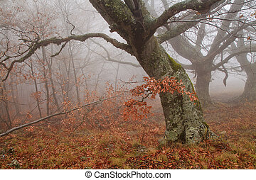 Misty forest in autumn