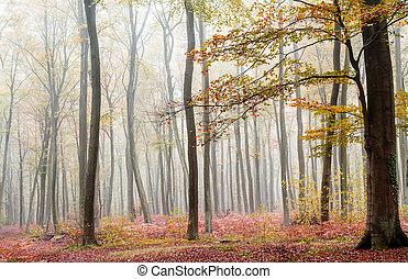 misty forest in fall season