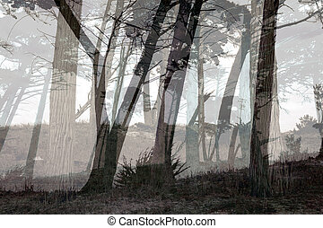 Misty forest in Monterey, California