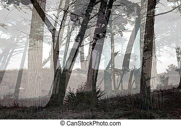 Misty forest in Monterey, California