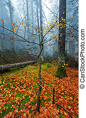Misty forest in the autumn