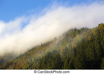 Misty forest in the Bavarian mountains