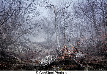 Misty forest in the Demerdzhi mountain range in the Valley of ghosts