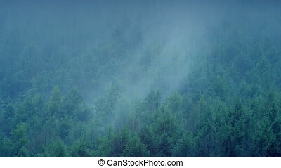Misty Forest In The Rain