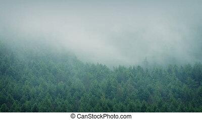 Misty Forest Landscape Timelapse