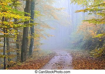 misty forest lane