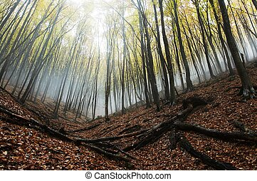 Misty forest - Magic forest of misty
