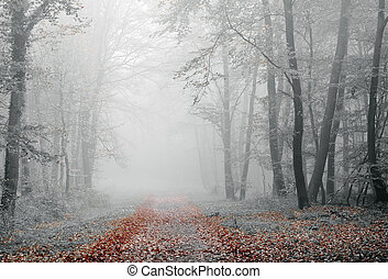 Misty forest - misty atmosphere in the forest, during fall ...
