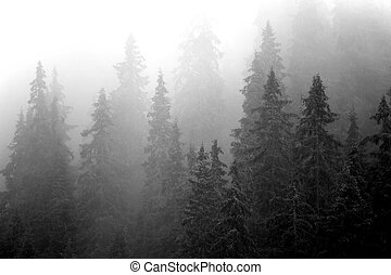 Misty Forest - Misty forest in Parang Mountains, Romania