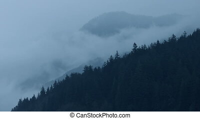 Misty Forest Mountainside - Moody mountain landscape with...