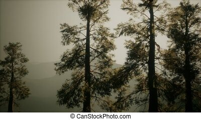 Misty forest on the mountain slope