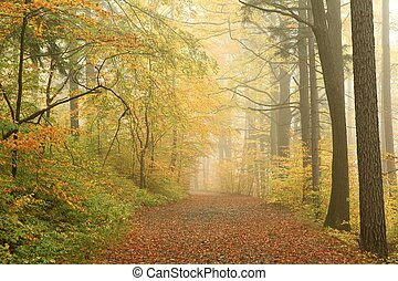 Misty forest path - Forest path on a misty autumn morning
