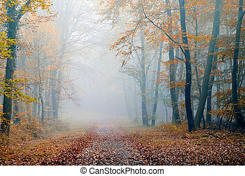 misty forest - misty atmosphere in the forest, during the...