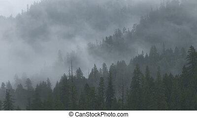 Misty Forest Ridges