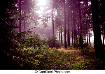 misty forest - foggy forest at the morning at autumn