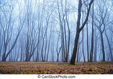Misty in the forest
