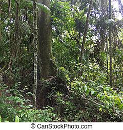 Misty jungle, rainforest scene.
