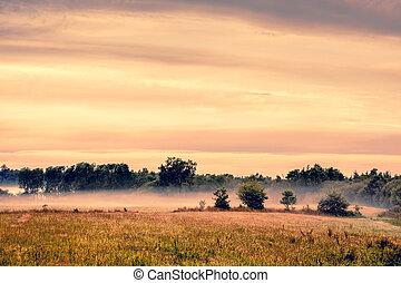 Misty landscape an early morning