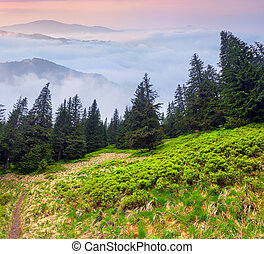 Misty landscape in the mountains.