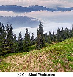 Misty landscape in the mountai