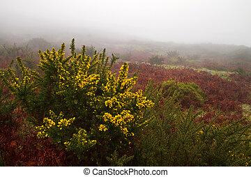 Misty landscape.
