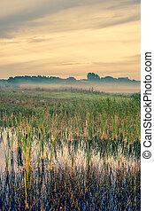 Misty landscape with a quiet lake