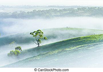 Misty Morning - Adelaide Hills, South Australia